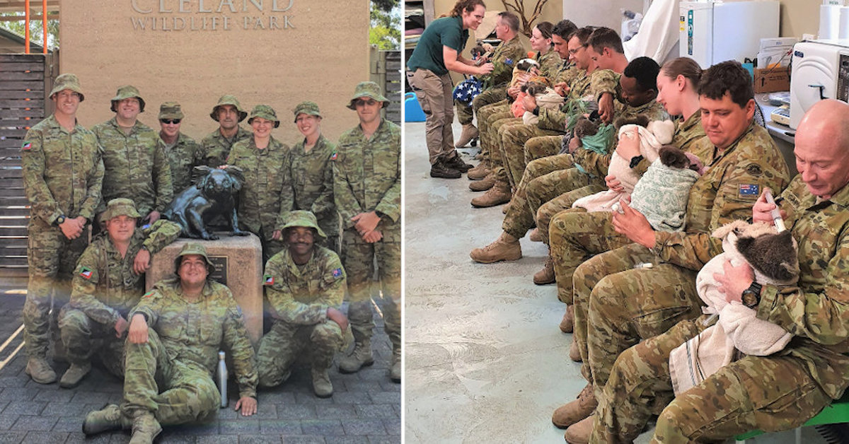 Australian Army Troops Spend Their Breaks Caring For Hungry Baby Koalas