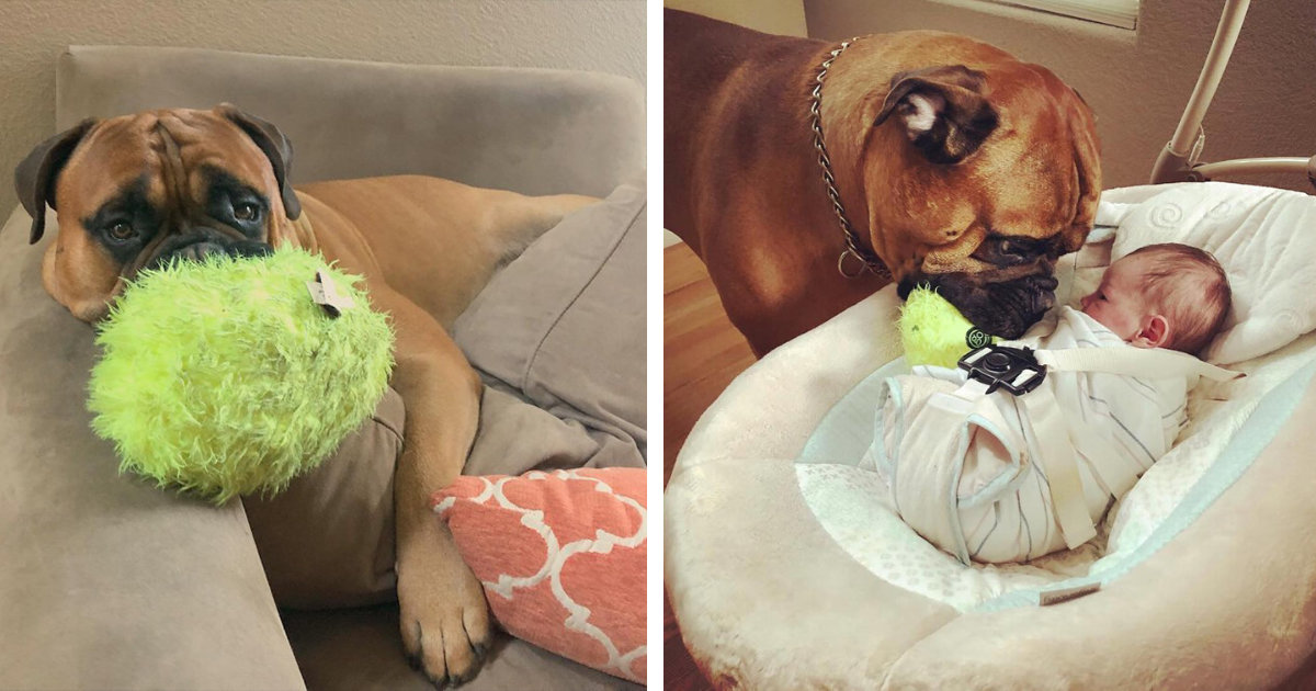 Dog Shares His Favorite Toy With His Newborn Brother Every Time He Cries