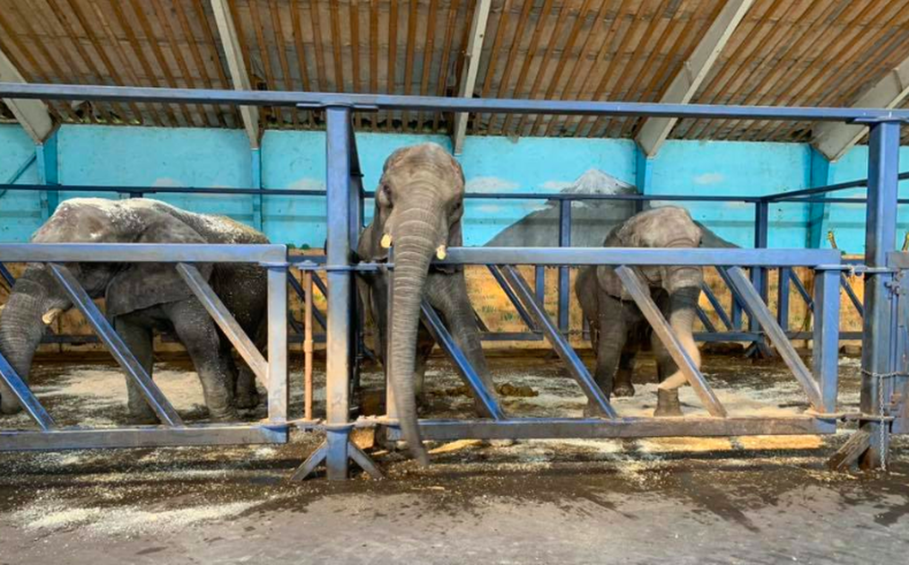 Denmark Adopts Country's Last Circus Elephants So They Can Retire Peacefully