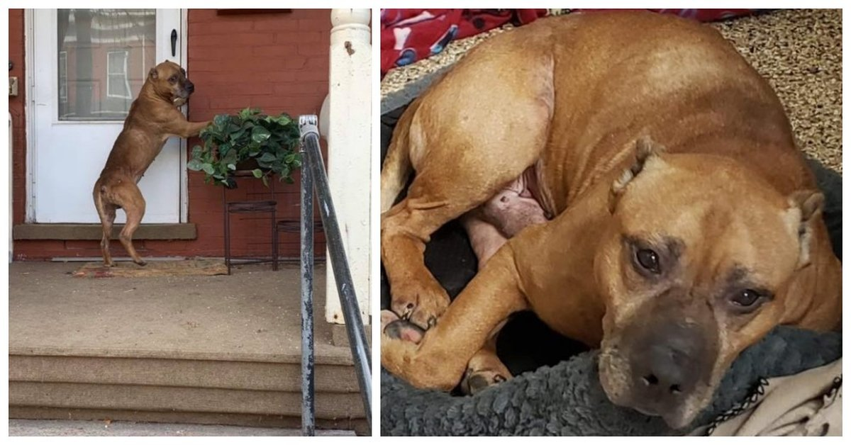 Dog Waited Outside Empty Home For Weeks After Family Moved Away And Left Him