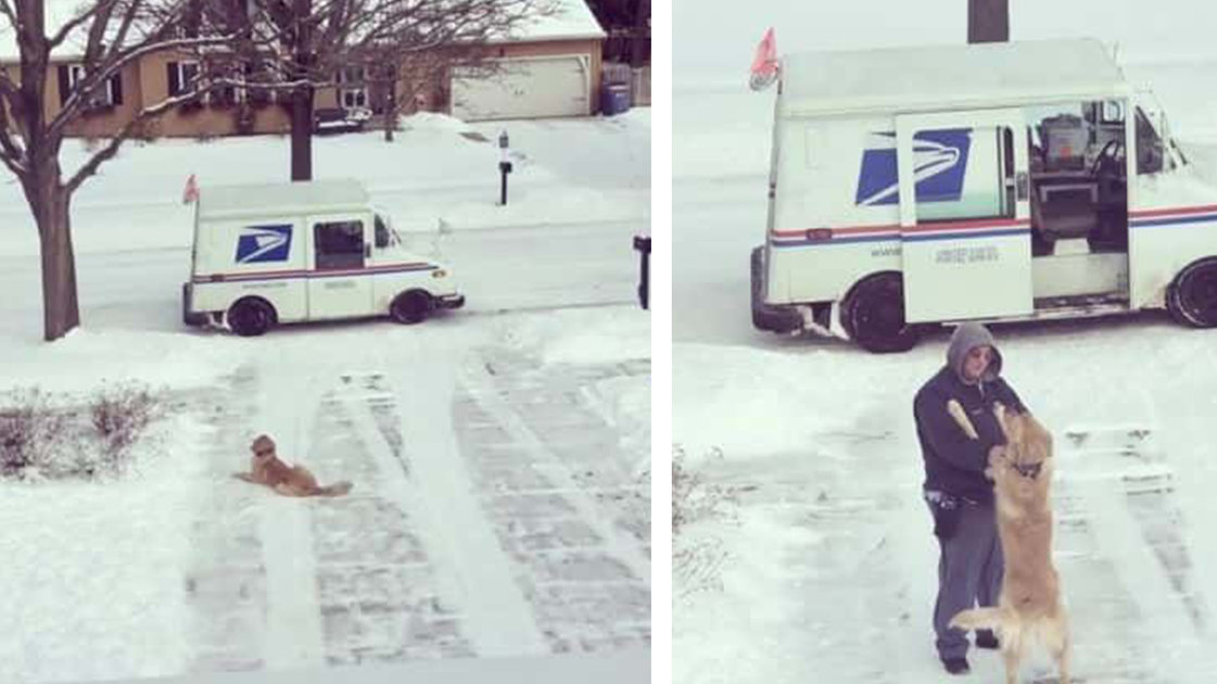 Dog Waits For His Daily Hug From The Mailman