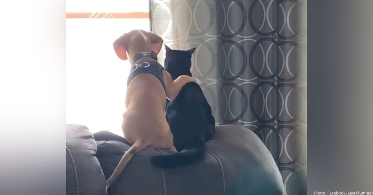This Beagle Puppy Is Best Friends With A Cat, And Their Adorable Friendship Is Going Viral