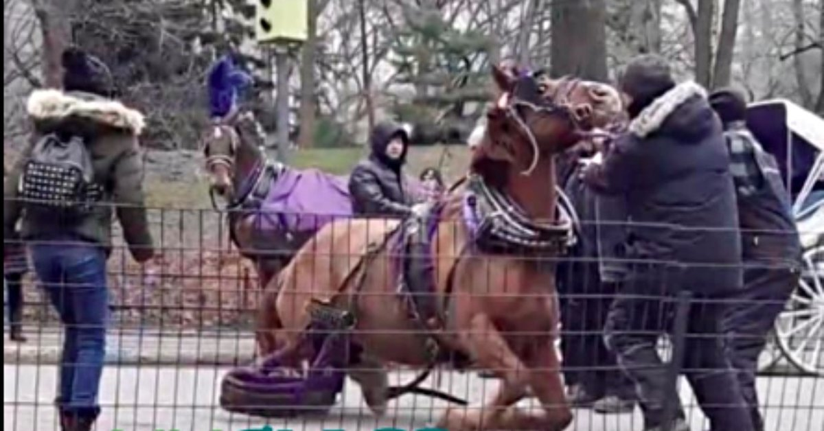 Central Park Carriage Horse Collapses In Front Of Horrified Tourists Before Being Euthanized