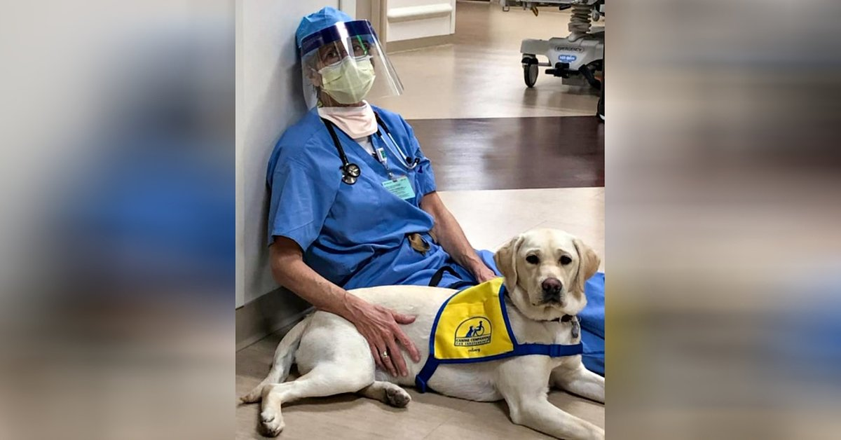 Service Dog Comforts Stressed And Exhausted ER Doctors And Nurses Fighting Against COVID-19