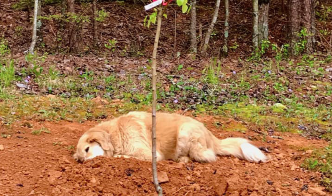 Three-Legged Dog Mourns The Deaths Of His Animals Friends