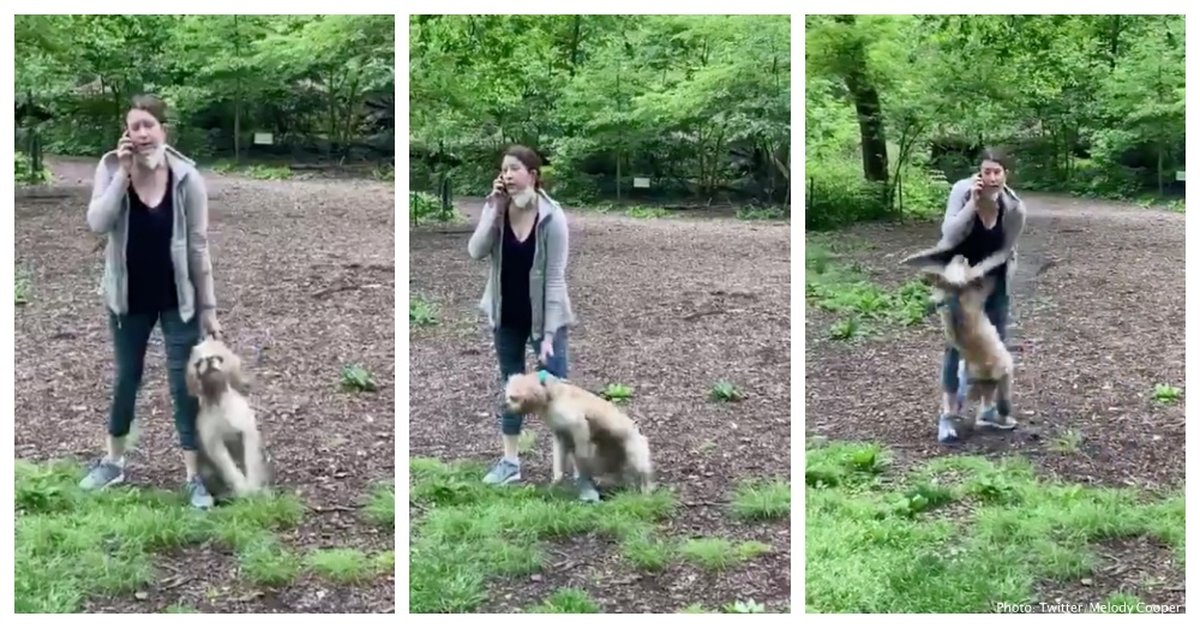 Dog Relinquished To Shelter After Disturbing Central Park Incident Goes Viral