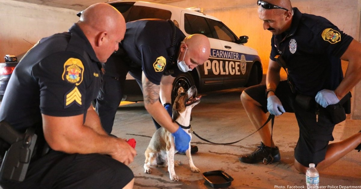 Officers Break Window To Rescue Dog Barking For Help Inside Sweltering Car