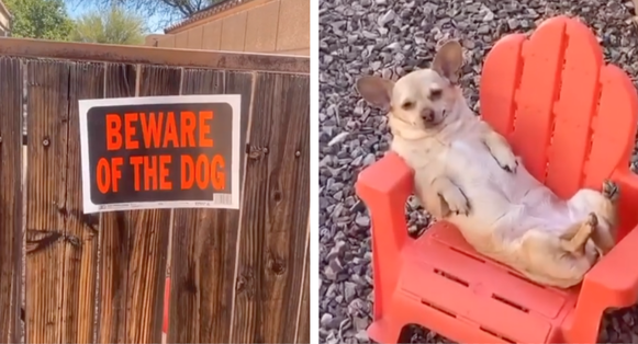 Family's Guard Dog Gets Caught Napping On The Job