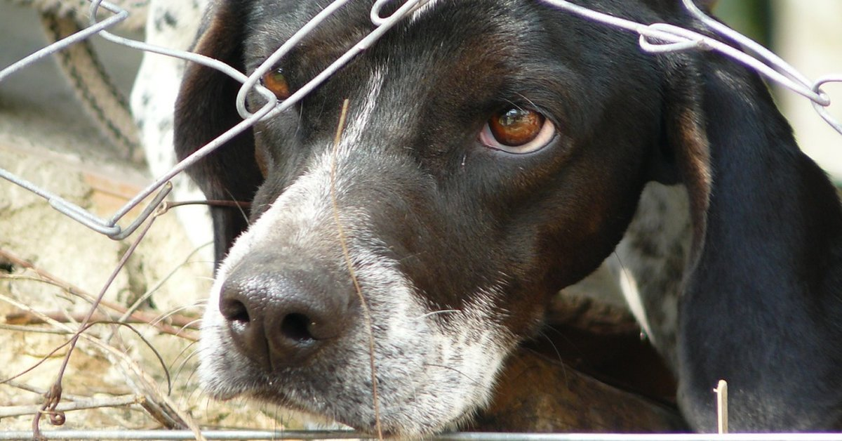 Scotland Increases Punishment For Animal Cruelty And Abuse To 5 Years In Prison