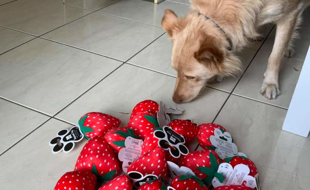 Autism Service Dog's Favorite Toy Gets Discontinued So The Store Sent Him  The Last Box | The Animal Rescue Site News