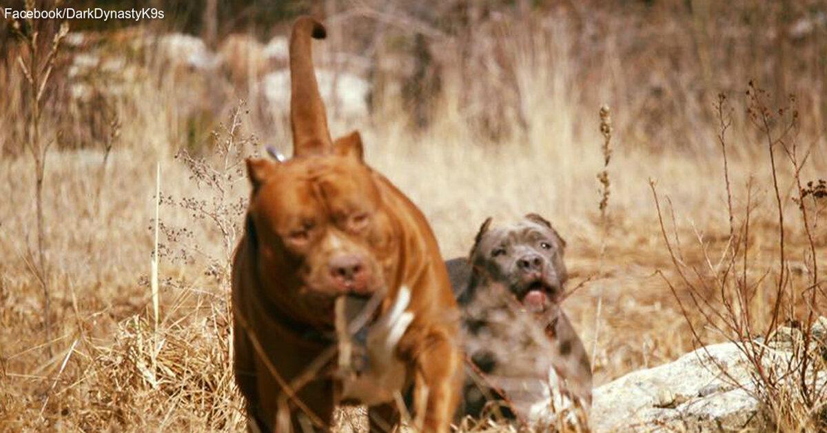 These Backyard Breeders Show the Dark Side of Dog Breeding